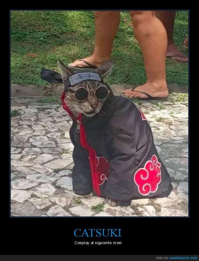 catsuki,cosplay,gato,ninja