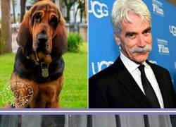 Enlace a Estos son los perros rescatados que interpretarán el live action de la Dama y el Vagabundo