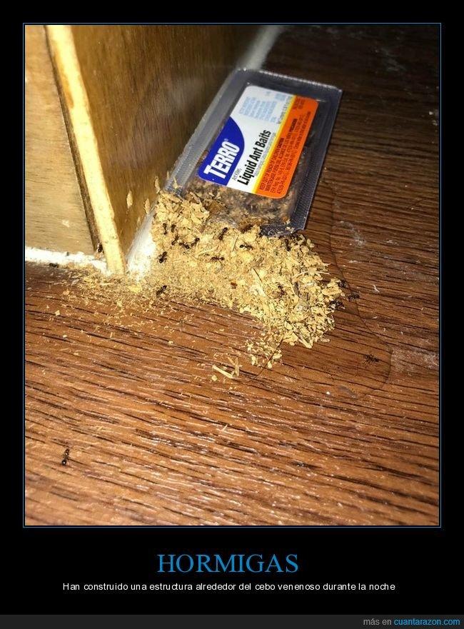 construir,estructura,hormigas,veneno