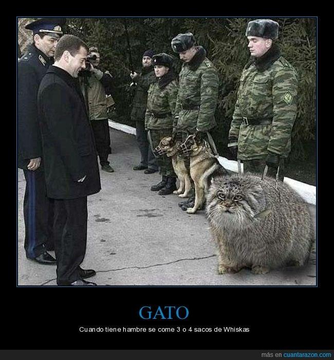 gato,gigante,gordo,wtf