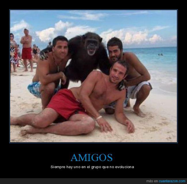 amigos,mono,playa,wtf