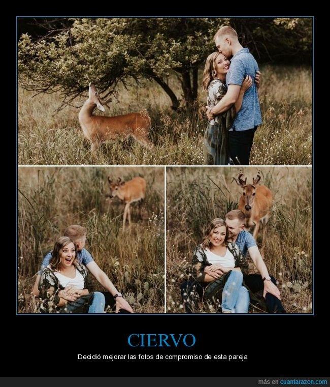 ciervo,compromiso,fotos,pareja,photobomb