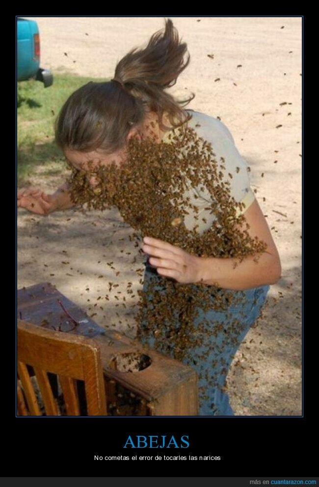 abejas,wtf