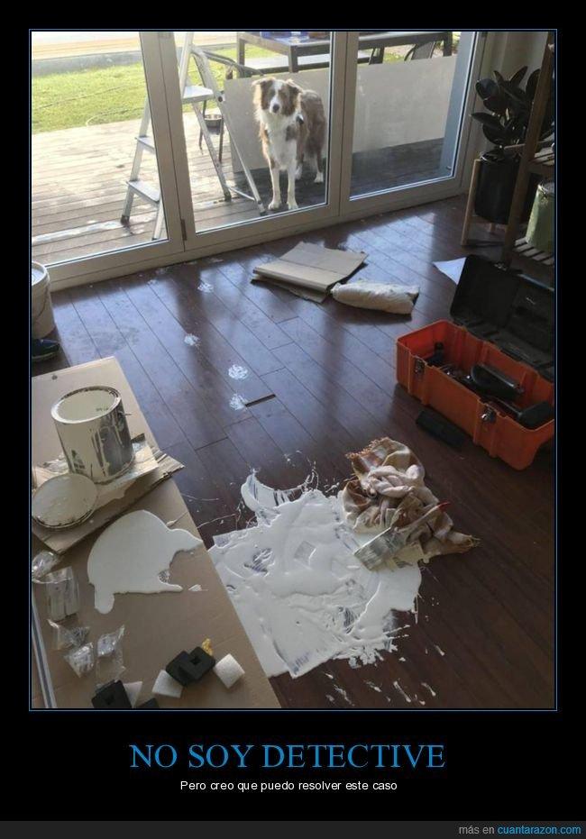 cubo,fails,perros,pintura