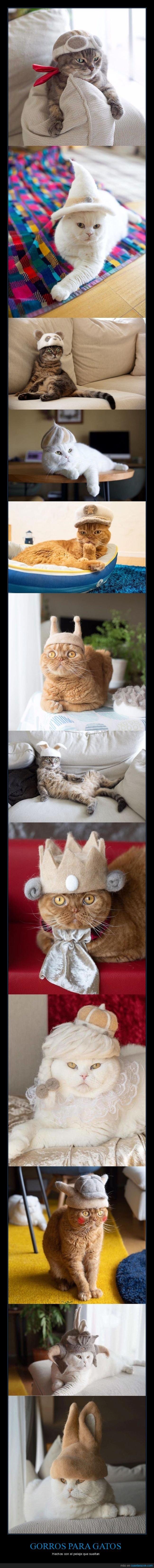 gatos,gorros,pelaje