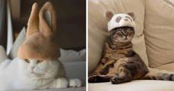 Enlace a Estos gatos tienen una gran colección de gorritos hechos con el pelaje que sueltan