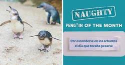 """Enlace a Este acuario elige al pingüino más """"malo"""" cada mes, y sus """"crímenes"""" son muy divertidos"""