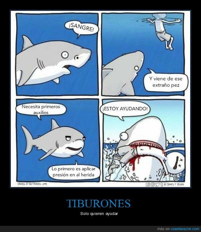 ayudar,herida,primeros auxilios,sangre,tiburón