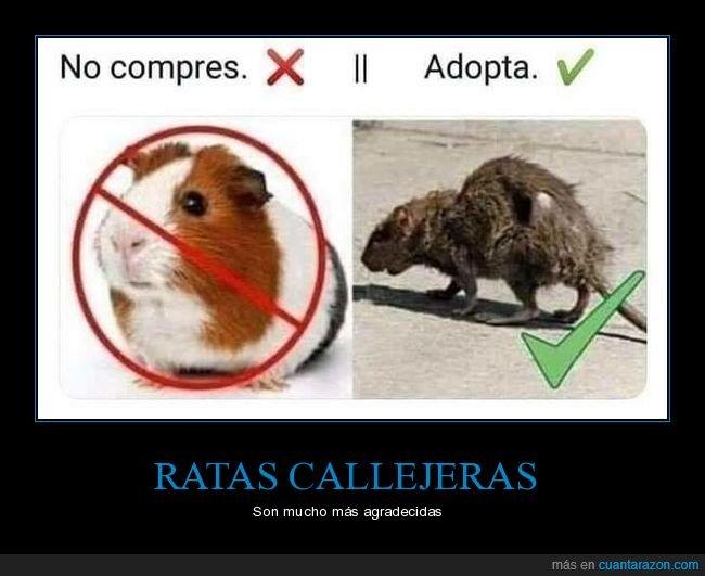 adoptar,comprar,rata
