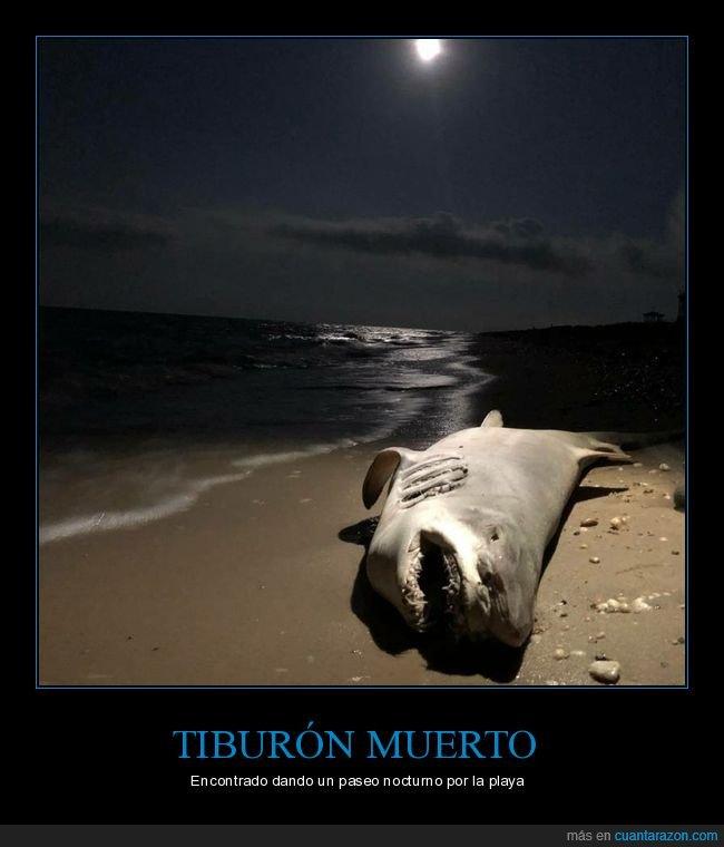 muerto,playa,tiburón,wtf