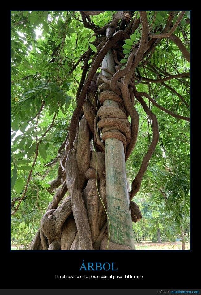 abrazar,árbol,poste