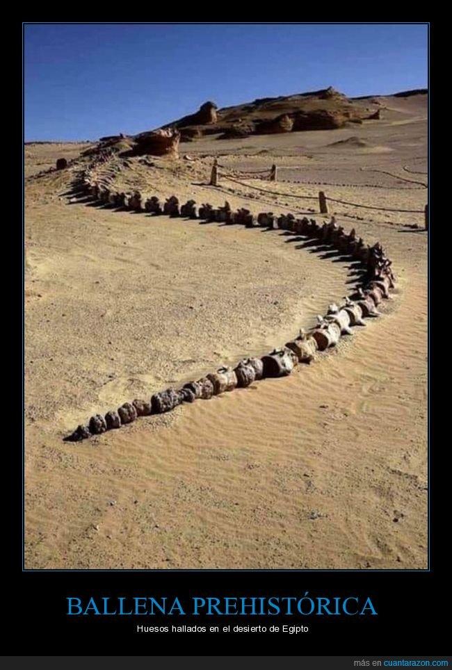 ballena,egipto,huesos