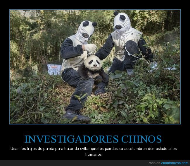 chinos,investigadores,pandas,wtf