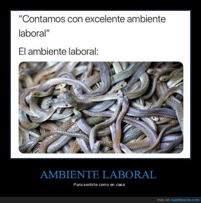 ambiente laboral,serpientes,trabajo
