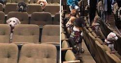 Enlace a Estos perros de servicio asistieron al musical de Billy Elliot para aprender a comportarse en un teatro