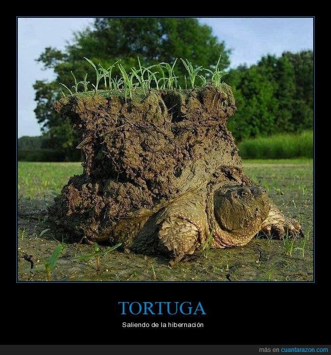 hibernación,tierra,tortuga