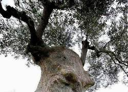 Enlace a Tengo la sensación de que si me acerco a este árbol me dará sabios consejos