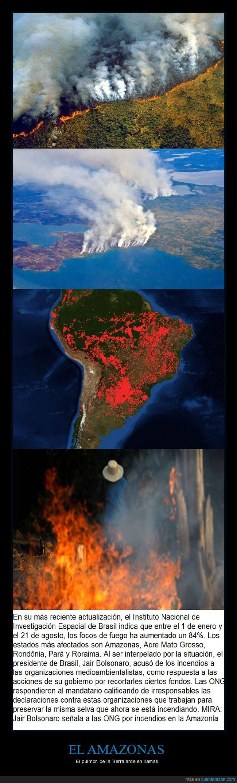 agricultura,amazonas,bolsonaro,brasil,incendios