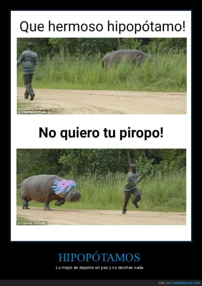 absurd,hipopótamo,piropo