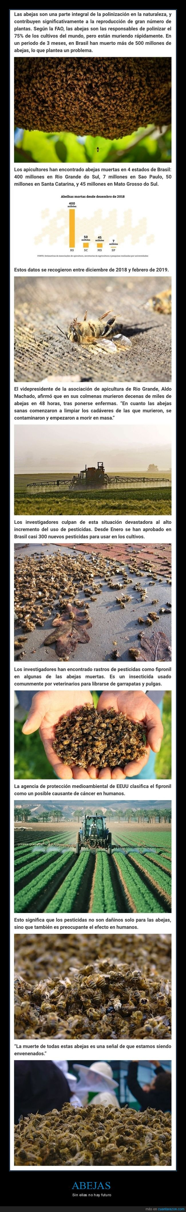 abejas,brasil,muriendo