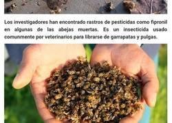 Enlace a En Brasil ya han muerto 500 millones de abejas en 3 meses, y se cuestiona el futuro de nuestros alimentos