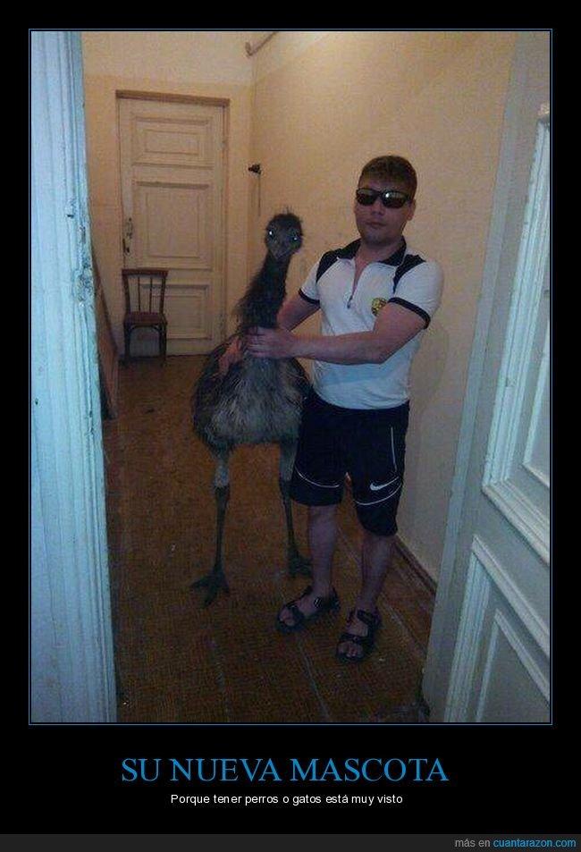emú,mascota,wtf
