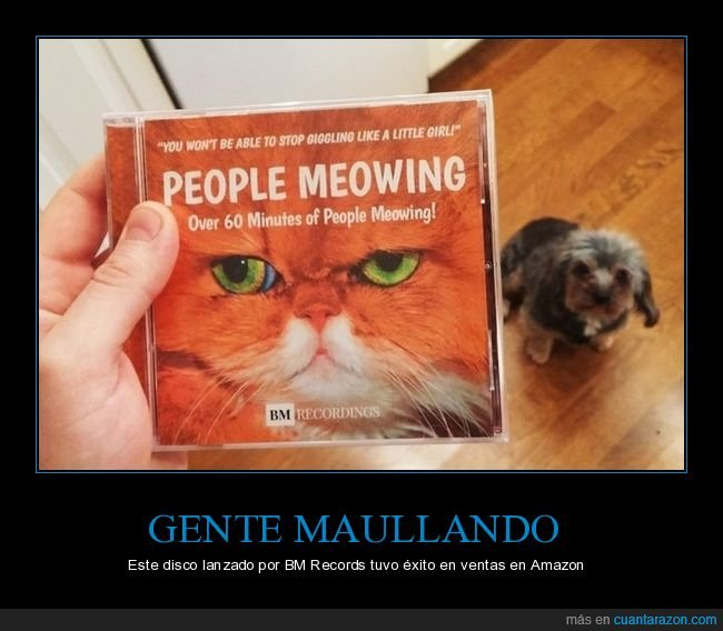 disco,gatos,maullando,wtf
