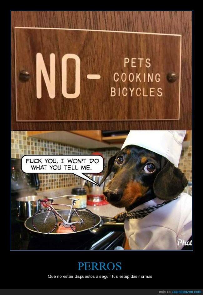 absurdo,bicicletas,cartel,cocinar,personal,prohibición