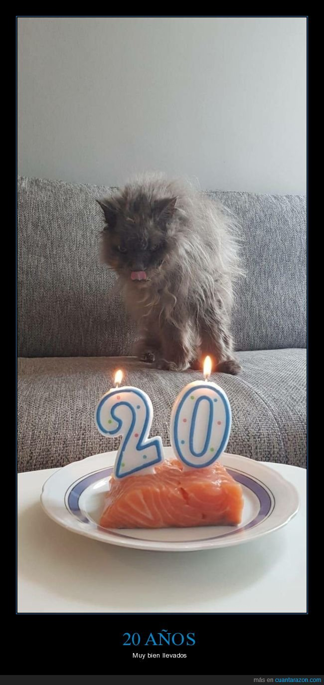 20 años,cumpleaños,gato,salmón