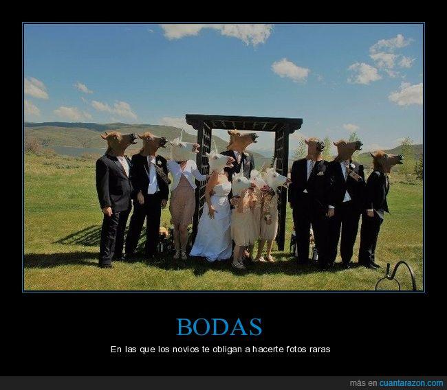 boda,caballos,máscaras,wtf