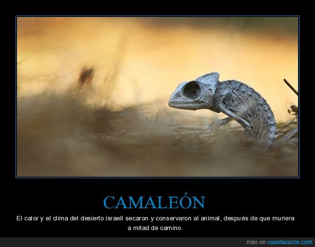 camaleón,muerto,seco