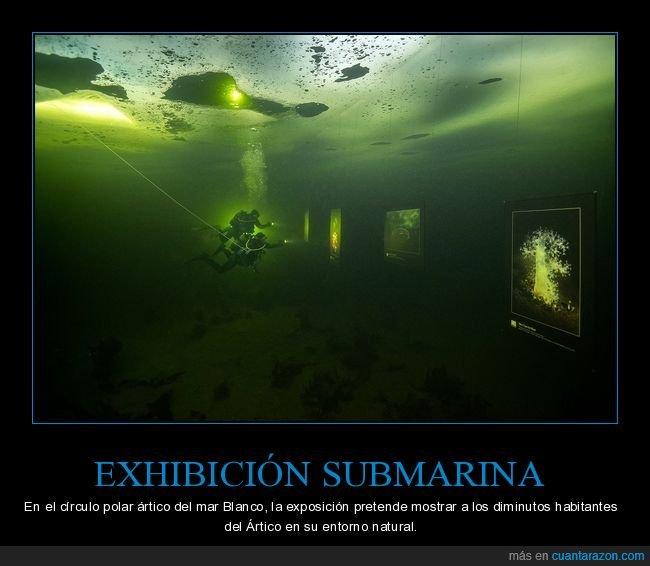 ártico,círculo polar ártico,exhibición,submarina