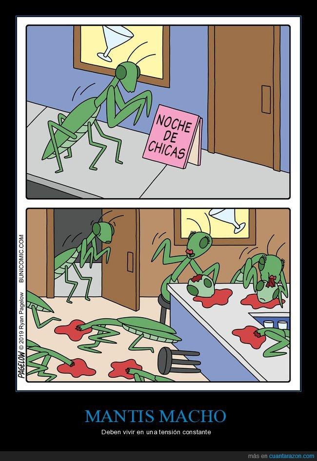bar,mantis,noche de chicas
