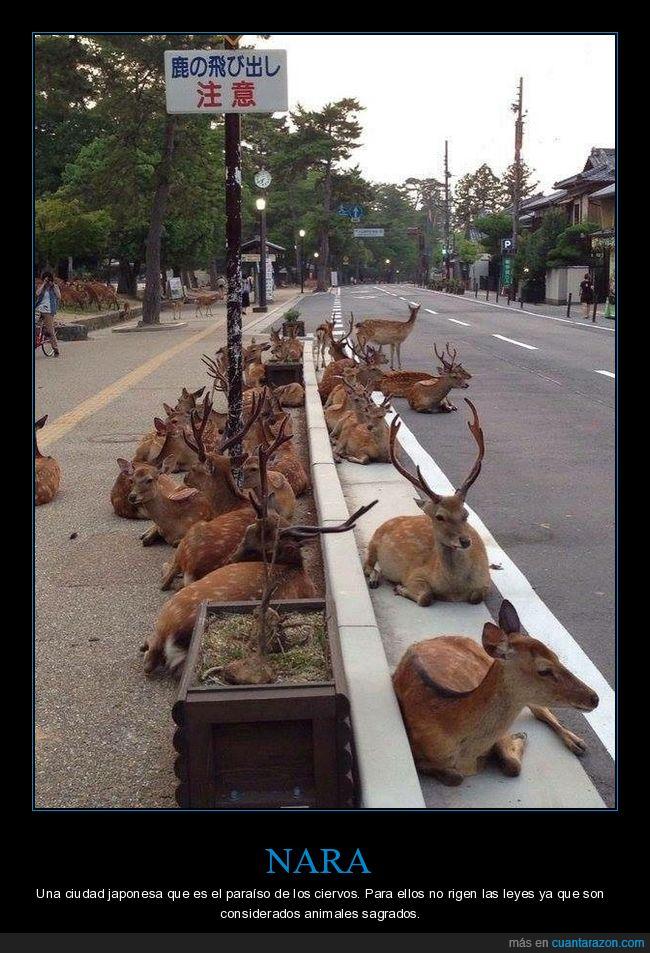 ciervos,japón,nara