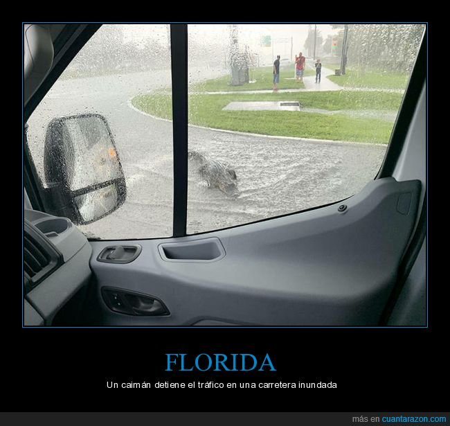 caimán,carretera,florida,inundación,wtf