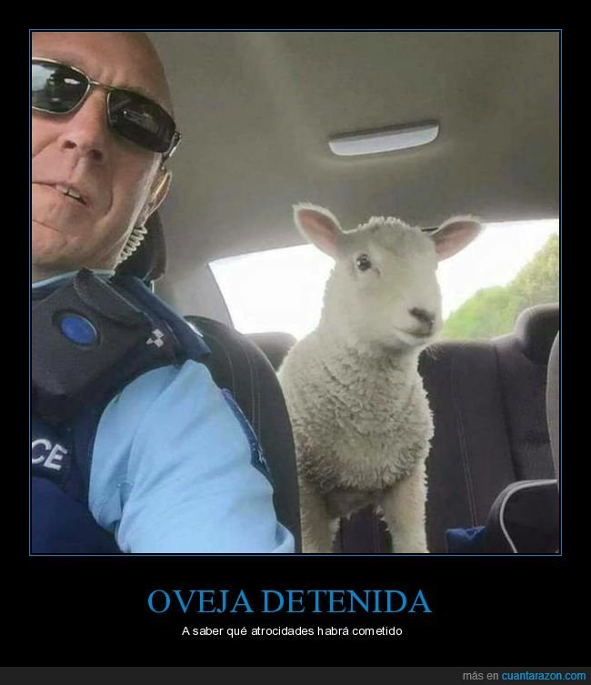 detenida,oveja,policía