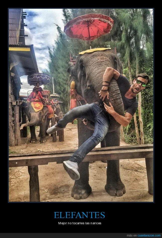elefante,trompa,wtf