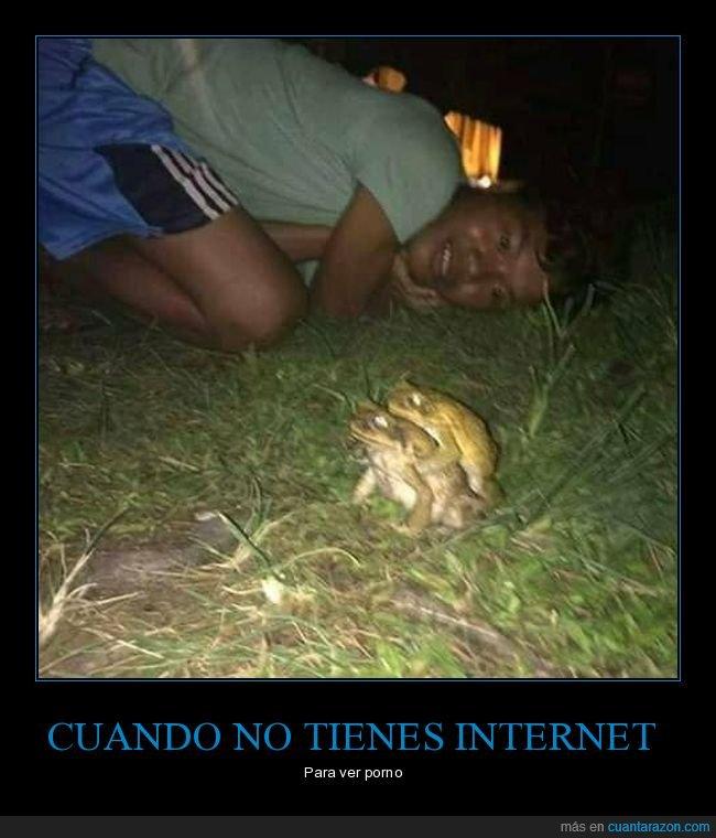 internet,ranas,sin internet