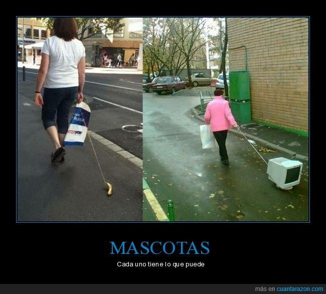mascotas,monitor,paseando,plátano,wtf