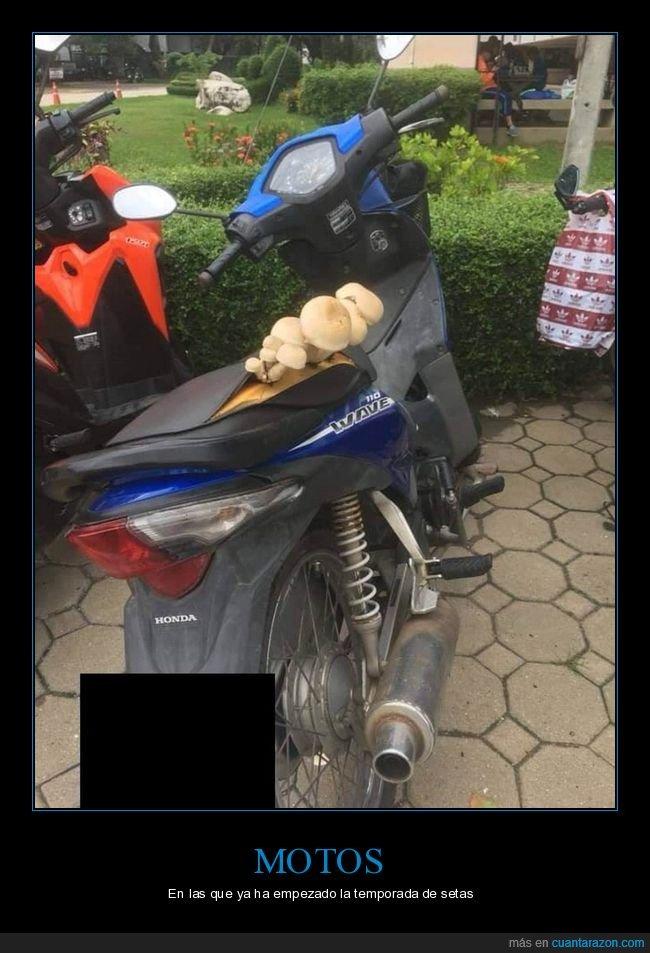 moto,setas,wtf