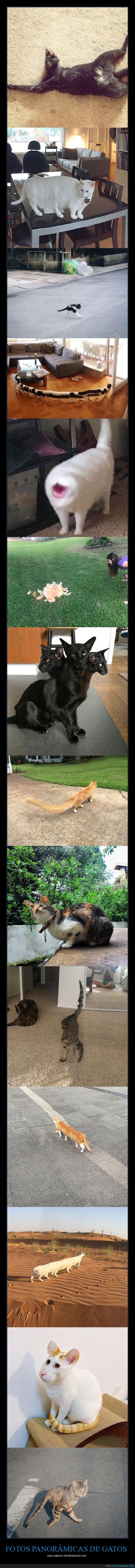 fails,fotos,gatos,panorámicas