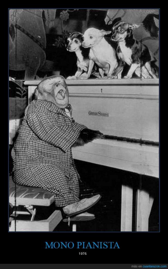 mirando,mono,perros,pianista,retro