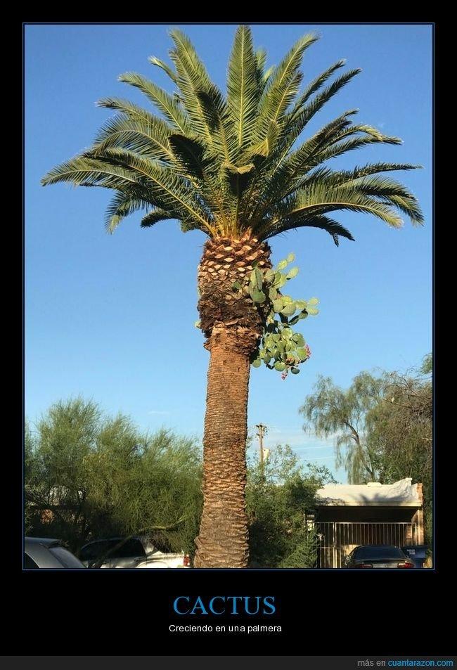 cactus,creciendo,palmera