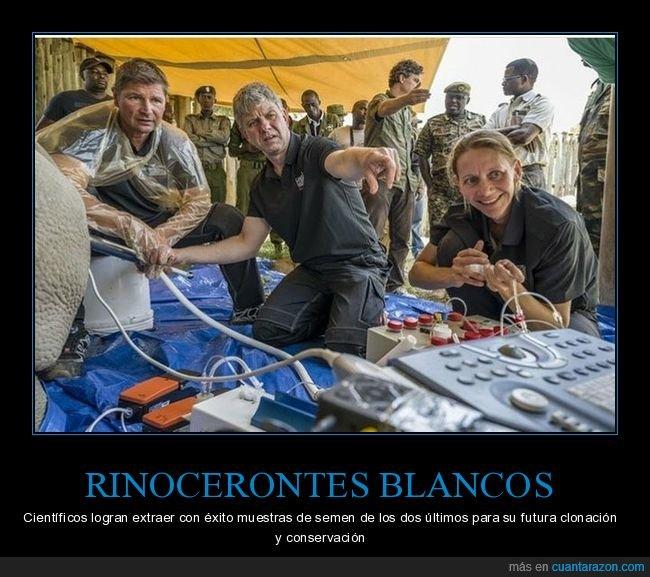 científicos,clonación,rinocerontes blancos