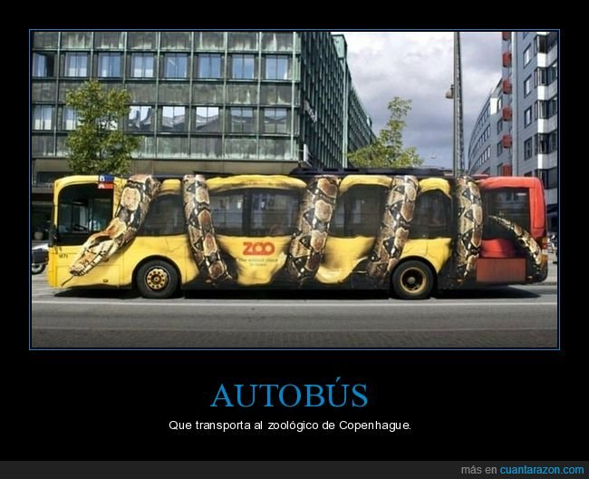 autobús,copenhague,zoo