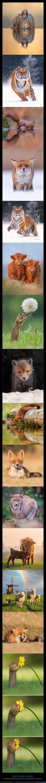 animales,dick van duijn,fotografía,naturaleza