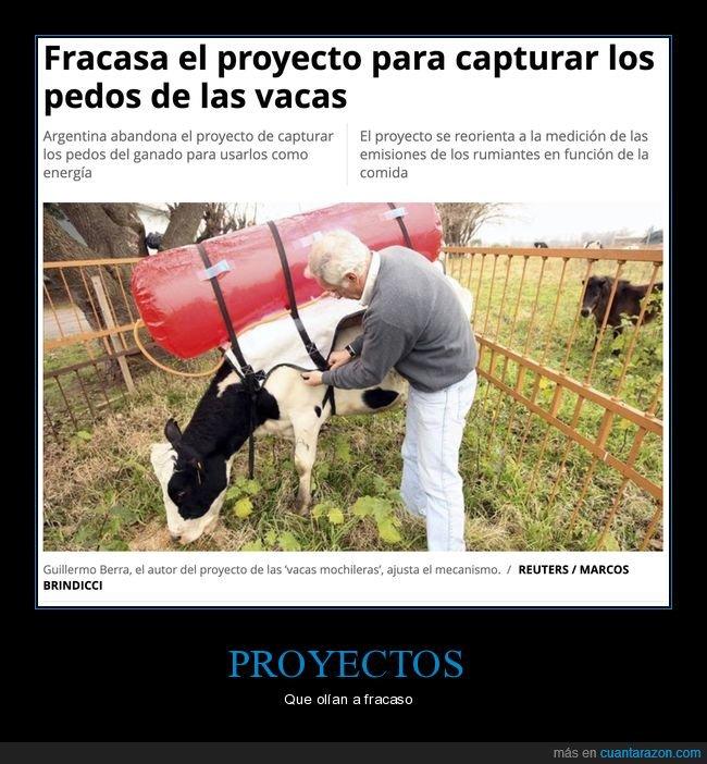 capturar,fracaso,pedos,proyecto,vacas,wtf