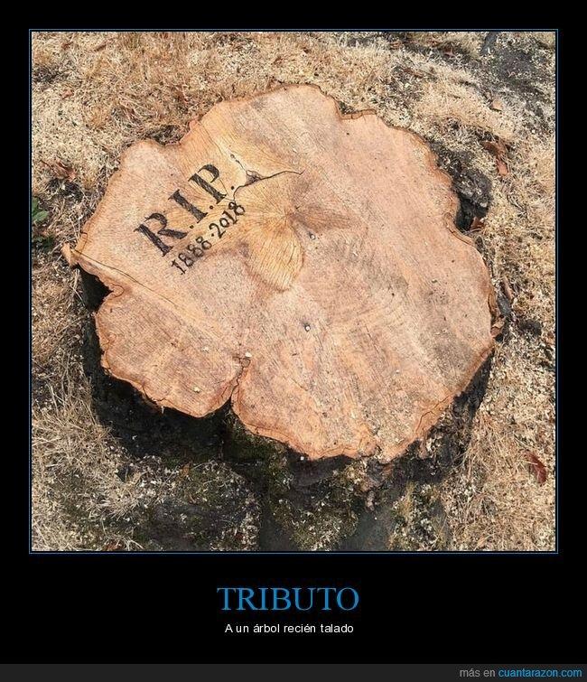 árbol,talado,tributo
