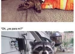 Enlace a Fotografías que demuestran que los mapaches son únicos en su clase