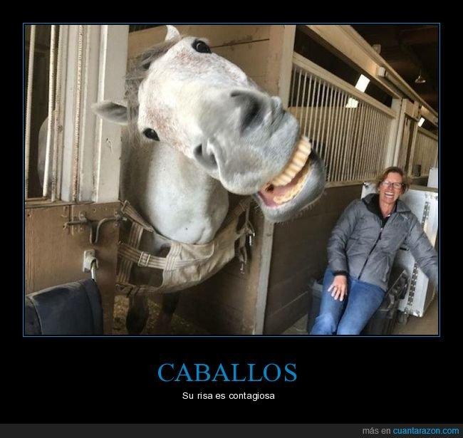 caballo,riendo,risa